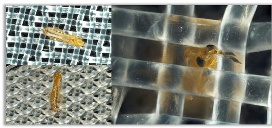 Evaluación de tres mallas anti-trips basadas en la morfología corporal de los trips (Thysanoptera: Thripidae) y la abertura de los agujeros de las mallas